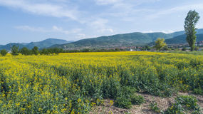 Yellow Farming Fields Royalty Free Stock Photography