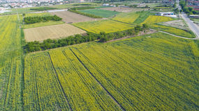 Yellow Farming Fields Stock Image