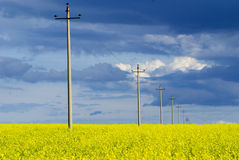 In a yellow farmland Stock Image