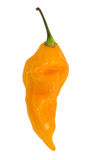 Yellow Fatalii hot pepper Royalty Free Stock Images