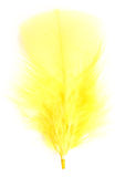 Yellow feather Stock Images
