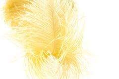 Yellow feather Stock Photo