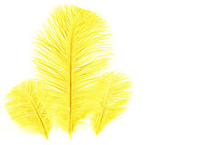 Free Yellow Feather. Royalty Free Stock Photography - 7605097