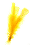 Yellow feather. On white background Stock Images