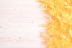 Yellow feather boa on light board on the left with space for tex Stock Photography