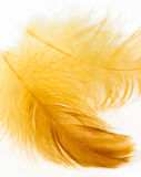 Yellow feather Stock Photography