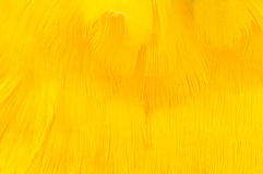 Yellow Feather Texture Royalty Free Stock Photo