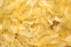 Yellow feathers. On a boa scarf stock photography