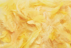 Yellow feathers Stock Photo