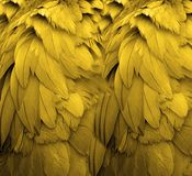 Yellow Feathers. I shot a photo of a crane, but on close examination realized I liked just the feathers Royalty Free Stock Image
