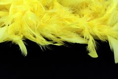 Yellow feathers on black background. Closeup of yellow downy feathers fine texture, black background, copyspace Stock Photo