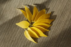 Yellow ficus leaves royalty free stock photo