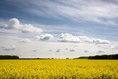 Free Yellow Field Stock Images - 30947694