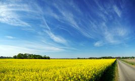 Yellow field. Spring time in north Croatia Royalty Free Stock Image