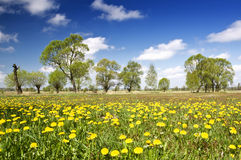 Yellow field Royalty Free Stock Photography