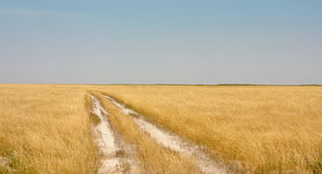 Yellow field. With sky and road royalty free stock photos