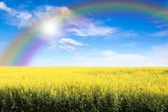 Yellow Field Against Rainbow Sky And Sun Burst Royalty Free Stock Photos