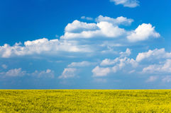 Yellow field on the background of blue sky Stock Photos