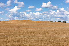 Yellow field on a background of blue sky with clouds Stock Image