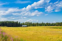 Yellow field and barn Royalty Free Stock Images
