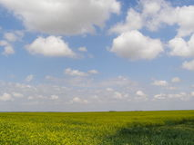 Yellow field, blue cloudy skies in background. Photo of beautiful yellow field with blue cloudy skies in background, landscape Royalty Free Stock Photography