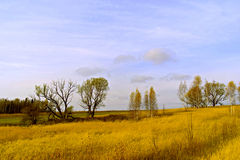 The yellow field and blue sky Stock Photo