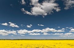 Yellow field and blue sky Stock Photo