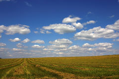 Yellow field after cropping Royalty Free Stock Photography