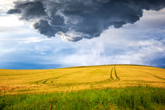Yellow field on dramatic sky Stock Photos