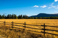 Yellow field and fence in Fintry Provincial Park stock photo