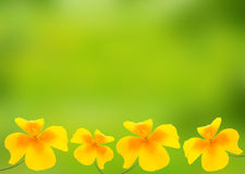 Yellow field flower Stock Photography