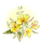 Yellow field flowers. Illustration of yellow field flowers Royalty Free Stock Photography
