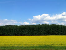 Yellow field, forest and sky Stock Photo