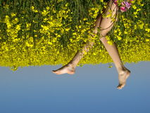 Yellow field with girl\'s legs Royalty Free Stock Photos