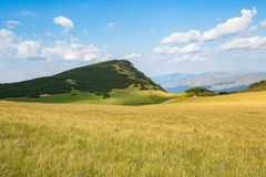 Yellow field and green mountain Stock Images