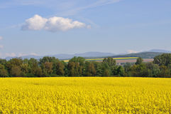 Yellow field with greenforest on a background Stock Photos