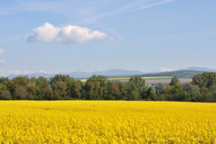 Yellow field with greenforest on a background Royalty Free Stock Photo