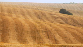 Yellow field after harvesting. Mowed Field Royalty Free Stock Photography