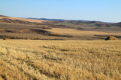 Yellow field with haystacks Royalty Free Stock Photography
