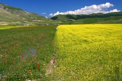 Yellow field Landscape. Yelow field landscape captured near Castelluccio di Norcia - Umbria - Italy Stock Image