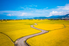 Yellow Field in the Middle of the Road during Daytime Stock Images