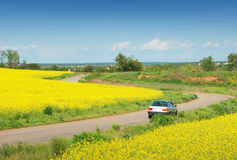 Yellow field of rape and car Royalty Free Stock Photos