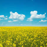 Yellow field with rape and clouds Royalty Free Stock Images