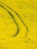 Yellow field of rape plant Stock Photography