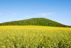 Yellow field of rapeseed with green hill Royalty Free Stock Photos