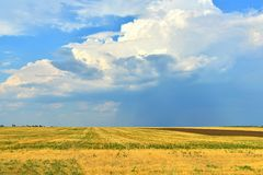 Yellow field with a rind on a background of the blue sky. Yellow field with a rind on a background of the blue sky stock photo