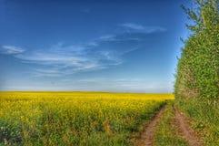 Yellow field. Road, tree, sky Stock Photos