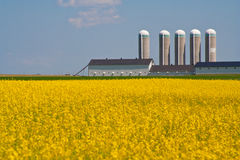 Yellow field and silo Stock Images