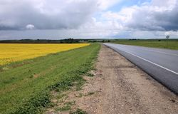 Yellow field sown with rape. The side of the asphalt road Stock Photos