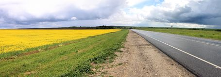 Yellow field sown with rape. The side of the asphalt road Royalty Free Stock Photo
